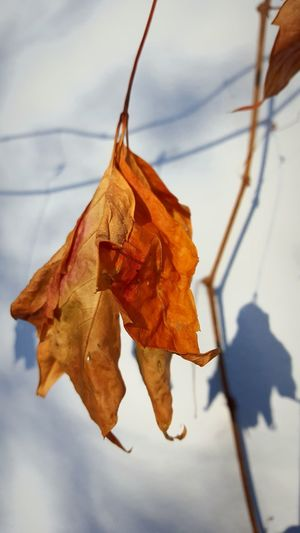 Orange Color Fall Fallseason лист дерево осень оранжевый листопад Fall Autumn Tree