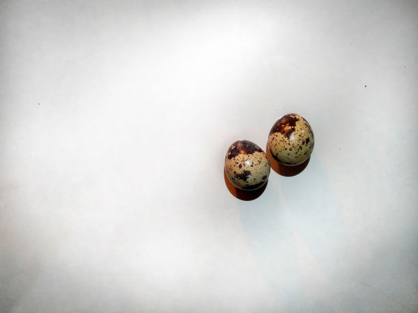 quail eggs will to be food or chicks? Pets Still Life Egg Quails Quail Eggs Food Chick Farm