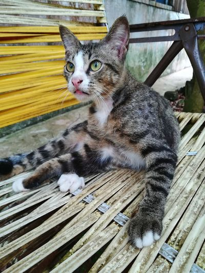 Portrait of cat on wood