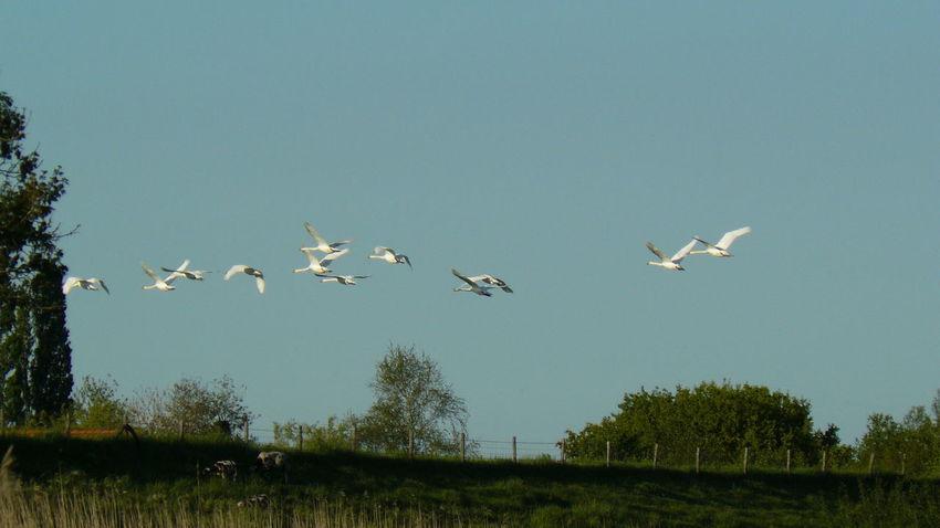 Bird Flying Tree White Stork Sky