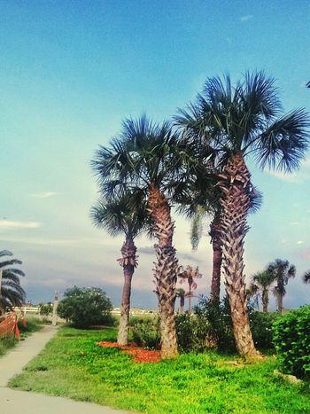 Tree Palm Tree Growth Outdoors Sky Palm Tree Tree Growth Coastal Living Coast Life Coastal Beauty Coast Landscape Landscape