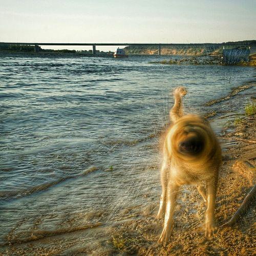 Dog in sea against sky