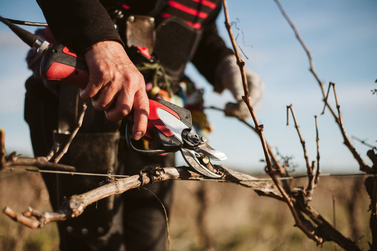 Prune Vines Vinyard Vineyard Vineyards  Vineyard Cultivation Agriculture Working Worker Rural Scene Real People Focus On Foreground Holding Day Nature Hand Outdoors Agricultural Field Agricultural Equipment Agricultural Land Wine Winemaking