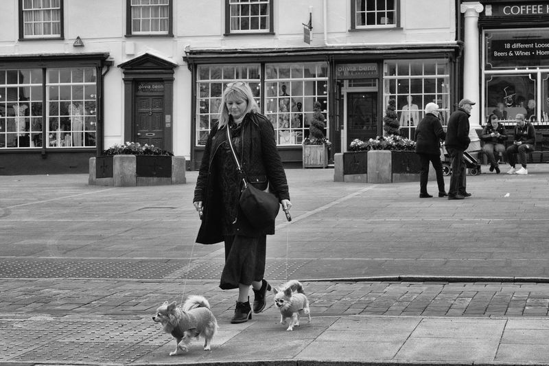 Walking the dogs on Angel Hill, Bury St Edmunds Walking The Dogs Dog Walking Dog Walking Days Dogs Dogs Of EyeEm Real People Mammal Domestic Animals Pets Domestic Animal Dog Lifestyles Animal Themes Walking Canine Street Warm Clothing Pet Owner Crossing The Road Dogs On A Lead Dark Clothing Angel Hill Bury St Edmunds Black And White Black And White Photography Black And White Street Photography Streetphotography