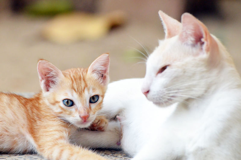 Why so serious.. Animal Themes Cat Lover Cat Lovers Cat Photography Cat Watching Close-up Curious Cat Day Domestic Animals Domestic Cat Feline Focus On Foreground Ginger Cat Kitten 🐱 Mammal Mother Cat With Her Kittens Mother Cat With Kitten No People Outdoors Pets Tabby Cat Whisker