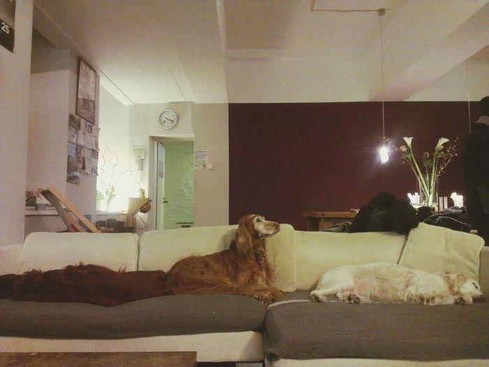 Three Lazy Dogs