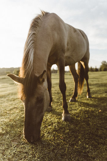 Sunrise Animal Themes Day Domestic Animals Field Foal Full Length Grass Grazing Herbivorous Horse Landscape Livestock Mammal Nature No People One Animal Outdoors Pasture Sky Standing