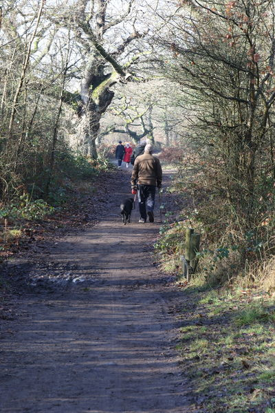 Beauty In Nature Bookham Bridleway Day Dog Dog Walker Foot Footpath Leisure Activity Lifestyles Men Nature Outdoors Real People Rear View Surrey Countryside Tree Walking Warm Clothing