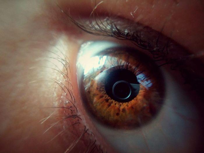 Human Eye Eyesight Eyelash Human Body Part Sensory Perception Iris - Eye Eyeball Macro One Person Day Ophthalmologist Reflection