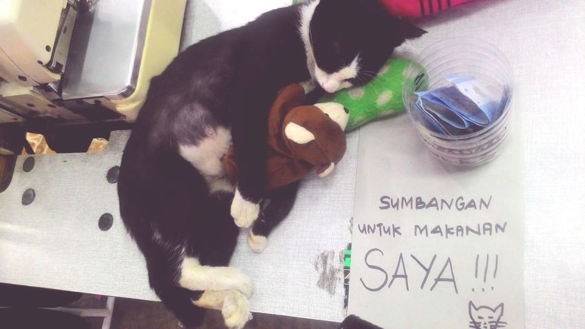 Comelkan dia... So cute.. Donation for her needs... I snap this picture last night at Pandan Uptown Cat Lovers Catsofinstagram Kucingmalaysia