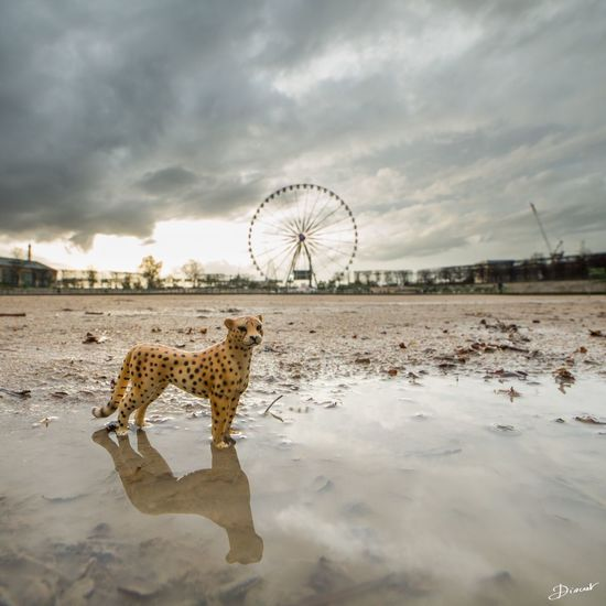 Nature Tuileries Earth Day Grande Roue De Paris Leopard Fauve