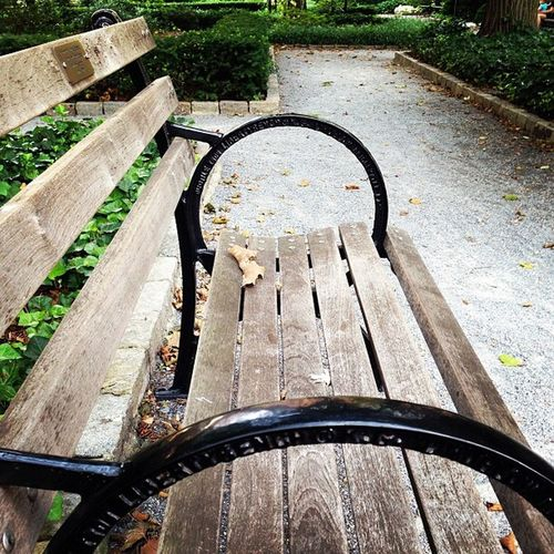 NYC NYC Photography Nyc Park NYC Street Photography Park Bench