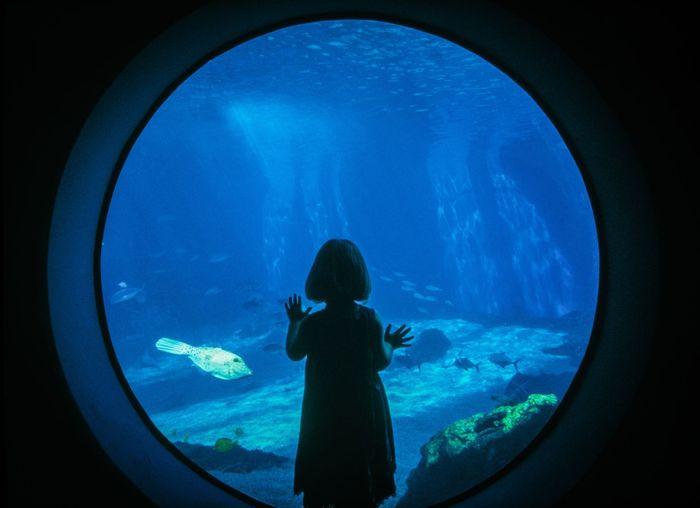 Maui Ocean Center Animal Animal Themes Animal Wildlife Animals In Captivity Animals In The Wild Aquarium Child Childhood Fish Glass - Material Indoors  Marine Nature Offspring One Person Rear View Sea Tank Transparent Underwater Watching Water