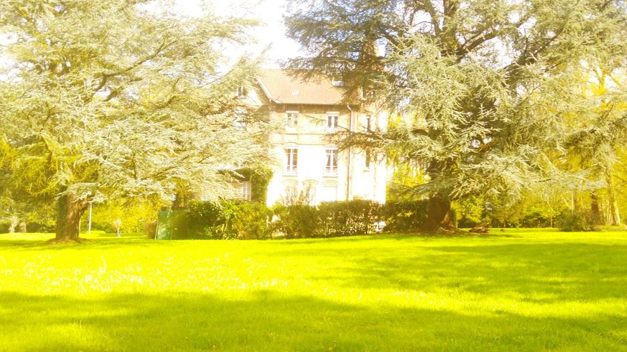 Park Smallmanor TreePorn Taking Photos Hello World Relaxing Enclosure Nature Photography Architecture Mansion House After The Rain Springtime