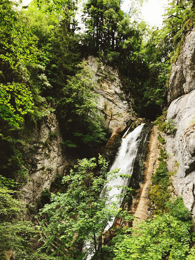 Scenic view of waterfall amidst trees in forest