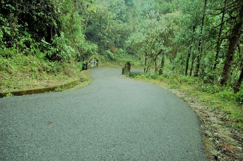 Rear view of person walking on road amidst trees in forest
