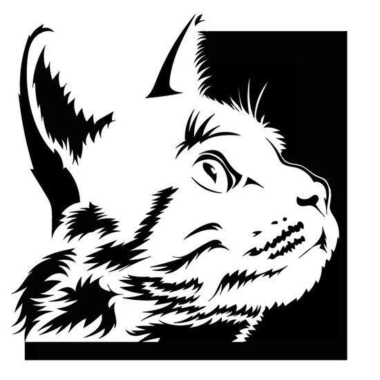 Chat Cat Dessin Drawing Félin  Minou Minet Miaou