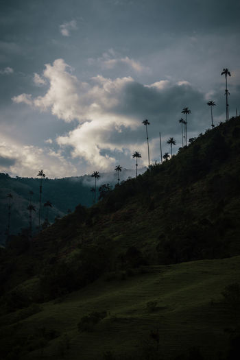 An unforgettable view at the highest wax palms in the world. Sky Cloud - Sky No People Nature Outdoors Non-urban Scene Idyllic Palm Tree Silhouette Silhouettes Travel Destinations Mountain Mountain Range Explore Discover  Valle Cocora Cocora Valley Remote Adventure Hill Land Low Angle View Plant Beauty In Nature Environment Tranquil Scene Landscape Green South America Latin America The Great Outdoors - 2019 EyeEm Awards