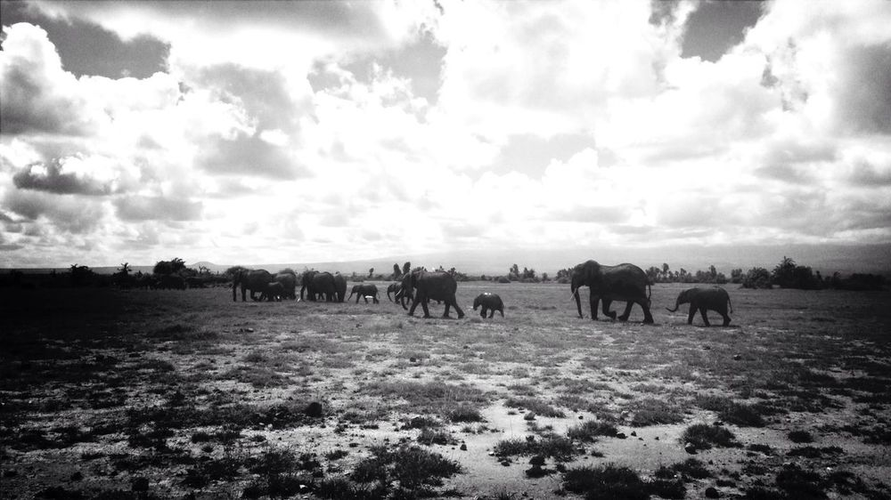 Elephants KCe Kenya Nature Escaping