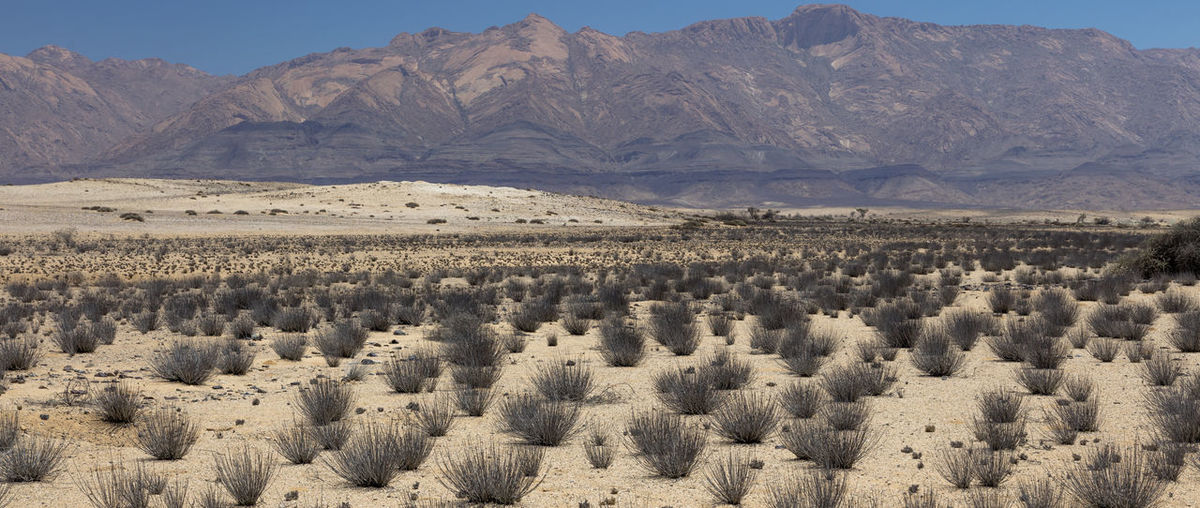 Grass Piles in the Brandberg Area, part of the Beautiful Damaraland in the Erongo Region of Namibia Brandberg Area Damaraland Erongo Region Namibia Pristine Travel Adventure Arid Climate Beauty In Nature Brandberg Desert Extreme Terrain Landscape Mountain Nature Non-urban Scene Scenics - Nature Semi Arid Climate Southern Africa Tranquil Scene Wildlife Nature