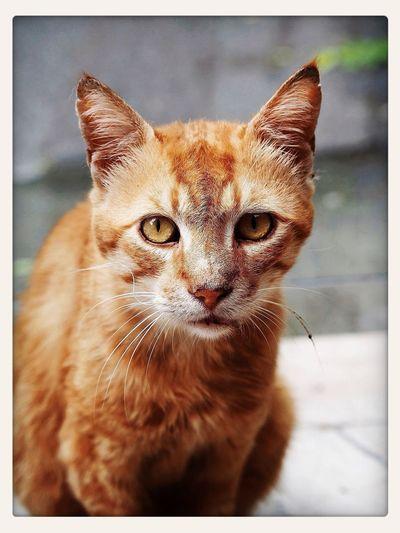 Cats Catstagram