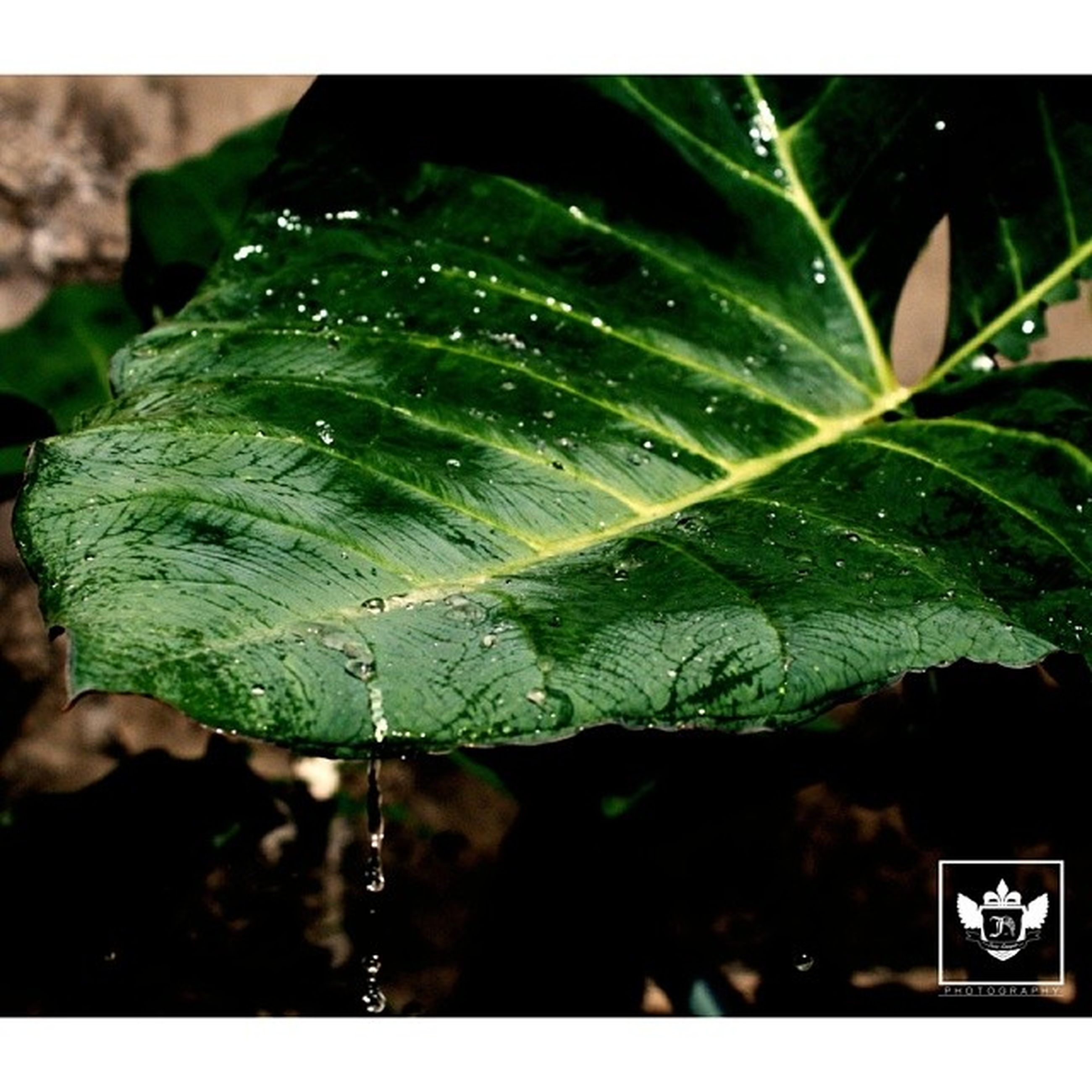 leaf, drop, close-up, wet, water, green color, focus on foreground, growth, nature, plant, fragility, dew, freshness, selective focus, raindrop, beauty in nature, rain, leaf vein, day, no people