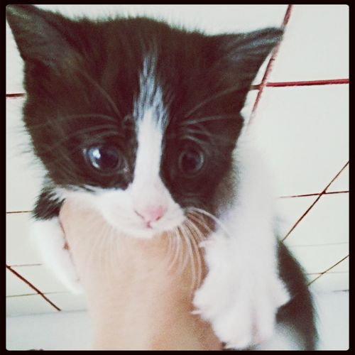 На даче живет кошка?, у нее есть котенок) Kitty Animal