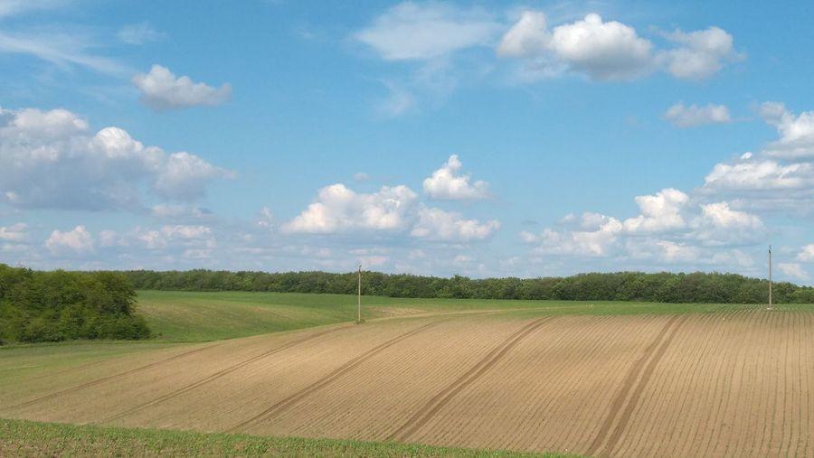 Fields Cloud -