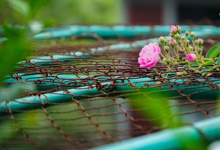 Bloom in rust