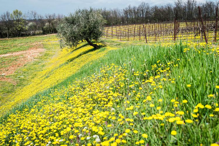 Fresh yellow flowers in field