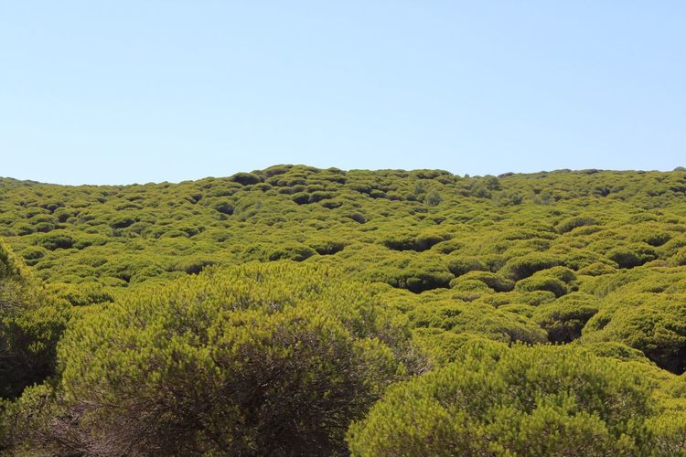 Pinar de La Breña Sky Beauty In Nature Green Color Plant Tranquility Growth Landscape