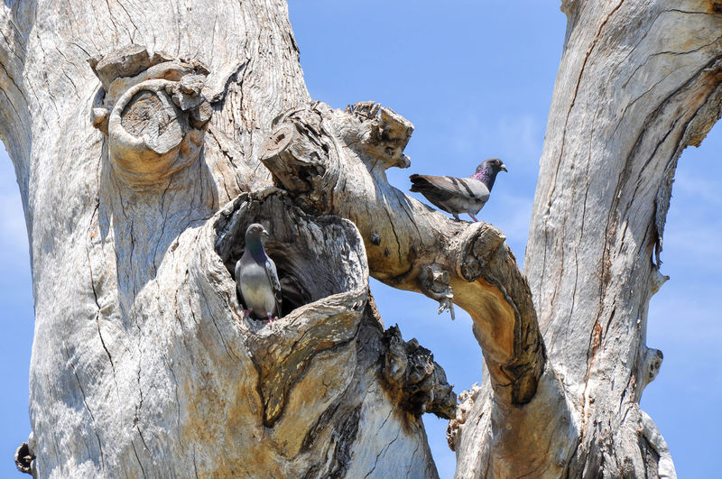 Low angle view of pigeons perching on tree