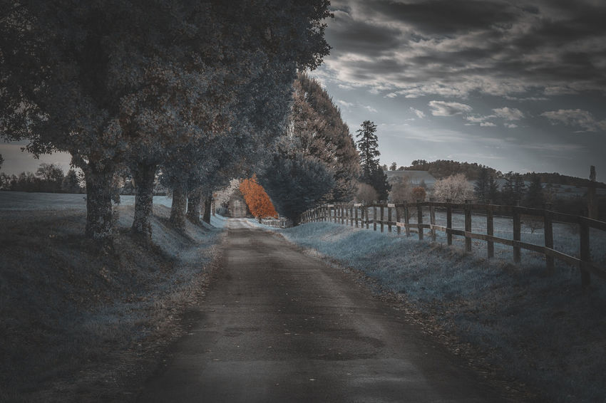 Tree Direction The Way Forward Plant Sky Nature No People Cloud - Sky Transportation Tranquility Road Diminishing Perspective Tranquil Scene Beauty In Nature Water Scenics - Nature Day vanishing point Outdoors Treelined