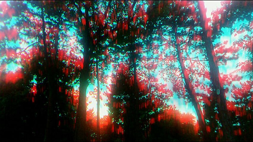 Forest Photography Forest Forestwalk Forest Trees Forest Path Forests Forest View Forestphotography Ghost 3d Trees Beauty In Nature Backgrounds Tree No People Multi Colored Night Nature Sky Day City Outdoors View