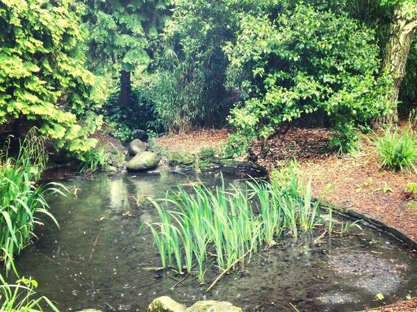 A pond at Peckham Rye on dog walk yesterday in the rain! Rain Mother Nature Natural Beauty Eye4photography
