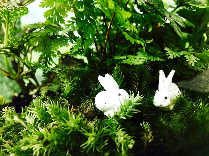 กระต่ายในดงผักชี White Color Growth Green Color Nature No People Easter Leaf Branch Beauty In Nature Tree Outdoors Day Freshness Animal Themes Rabbit Tiny
