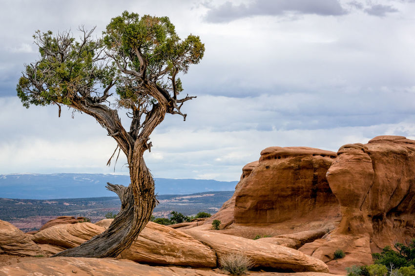 Arches National Park, Utah Beauty In Nature Cloud - Sky Day Landscape Nature No People Outdoors Rock - Object Scenics Sea Single Tree Sky Tree Water