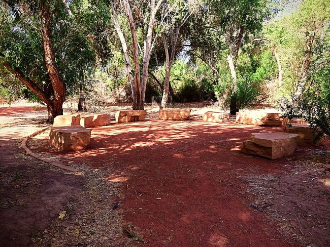 Sitting area on one of the nature trails next to the Colorado River in the West Wetlands✨ West Wetlands, Yuma, AZ ME ALONE ADVENTUROUS MOOD Nature Photography IPhone Photography Nature No People Day Plant Sunlight Outdoors Tree Built Structure Land Dirt