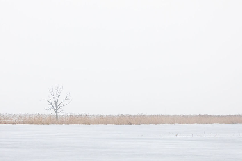 Bare tree in flooded and frozen grass area in nature reserve in winter Bare Tree Beauty In Nature Cold Temperature Copy Space Flat Fog Frozen Frozen Water Ice Lake Landscape Loneliness Nature Nature Reserve Reed - Grass Family Rural Scene Scenics Simplicity Single Tree Sky Tranquil Scene Tree Weather White Color Winter