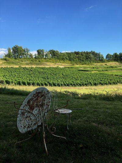 Wine Plant