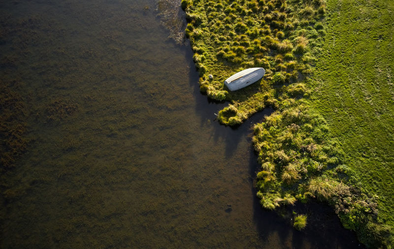 High angle view of plants on land by lake