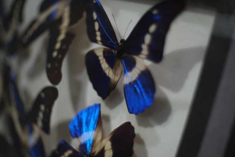 Sky pieces Pancolar 50mm F2 Carl Zeiss Jena FUJIFILM X-T1 Fuji X-T1 No Edit/no Filter Insect Swallowtail Butterfly Swallowtail Butterfly Bokehlicious