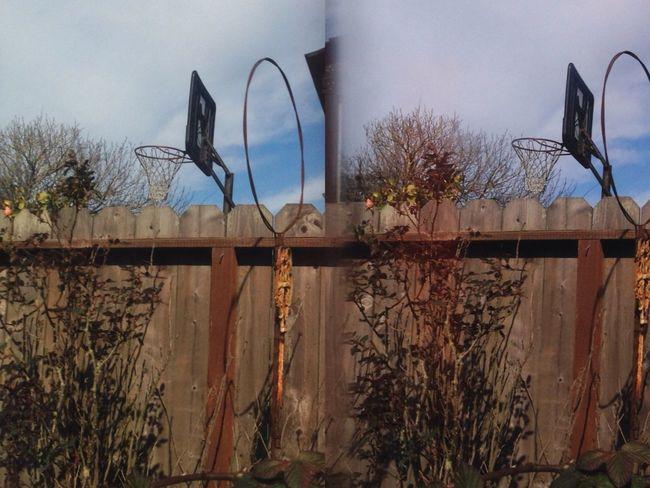 Fence Hoops In My Garden Poppy Camera