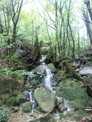 Shiratani Unsui Gorge/白谷雲水峡 Beauty In Nature Branch Flowing Water Forest Green Color Shiratani-unsui-kyo Shirataniunsuikyo Sky Tranquil Scene Walking Waterfall Yakushima Yakushima,japan