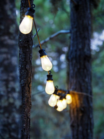 Branch Close-up Day Hanging Light Bulb Lighting Equipment Lighting Equipment Low Angle View Nature Nature No People Outdoors Tree