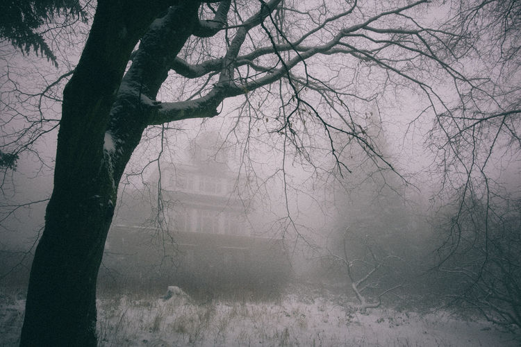 Fog Outdoors Mist Old House Haunted Hill Houses Village Abandoned Mystery Mysterious Eerie Tree