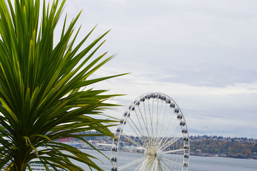 Seattle Veiws Please leave feedback City Cityscape Green Nature Palm Pike Place Market Seattle Sound Washington Bay Clouds Day Faris Wheel Gloomy Grey Nature No People Ocean Outdoors Overhead View Overlook Scenics Seattle Views Sky Water