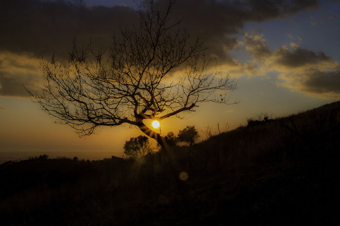 Beauty In Nature Nature No People Outdoors Scenics Silhouette Sky Sun Sunset Tranquil Scene Tranquility Tree Tree Sunset Tree_collection  Winter Sunset Autumn Colors Autumn Sunset Autumn Collection