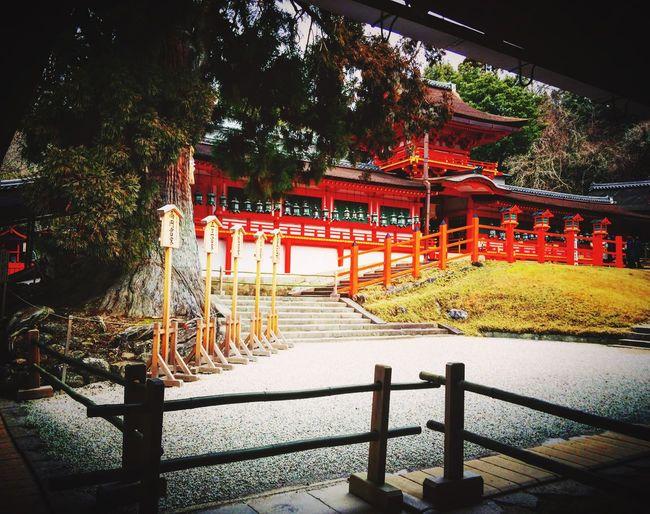 春日大社 林檎の庭 奈良 Nara