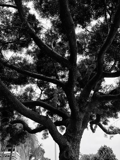 Artistic Expression The Great Outdoors - 2016 EyeEm Awards Showcase July OceansideCA Where I Live Hug A Tree Eyeem Market First Eyeem Photo EyeEm Best Shots Best Eyeem Pics EyeEm Best Shots - Black + White Hugging A Tree CaptureTheMoment Nature Lover